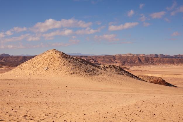 Piękna przyroda egiptu. piołun, błękitne niebo, słoneczny dzień.