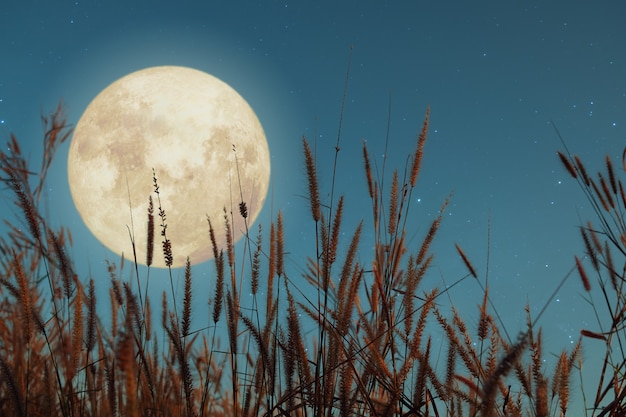 Piękna przyroda fantasy. dzika trawa i pełnia księżyca z gwiazdą. styl retro z odcieniem rocznika. sezon jesienny, halloween i święto dziękczynienia na nocnym niebie. koncepcja tło jesień.