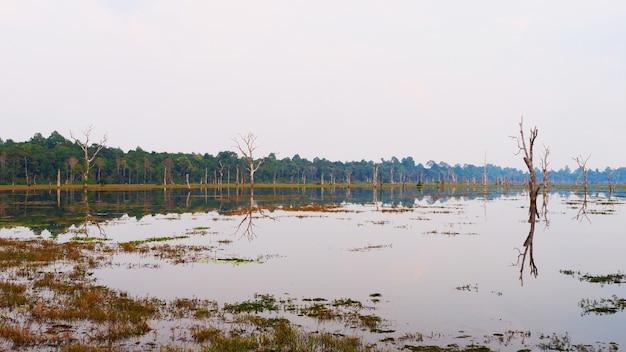 Piękna przyroda krajobraz widok stawu jeziora w neak poan w kompleksie angkor wat, siem reap, kambodża.