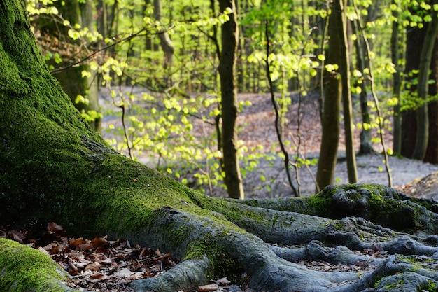 Piękna przyroda lasu w słoneczny dzień