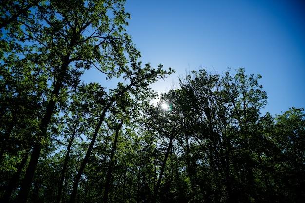 Piękna przyroda w jasny słoneczny dzień