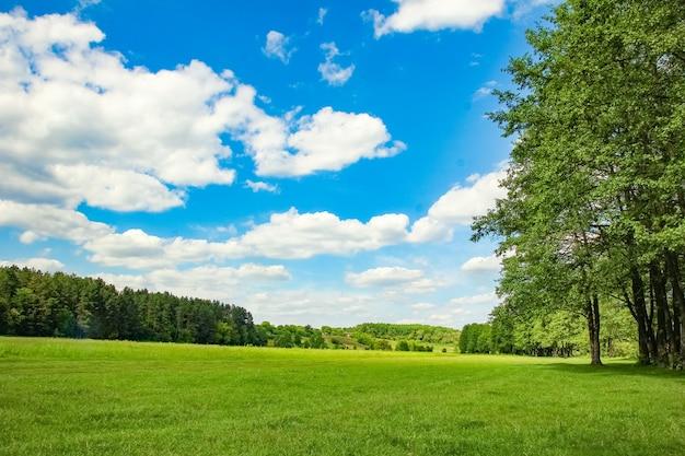 Piękna przyroda w parku przyrody