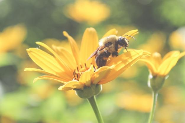 Piękna pszczoła na kwiacie