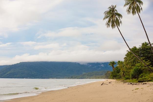 Piękna pusta plaża samui rano z palmami