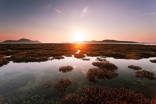 Piękna rafa koralowa podczas niskiego przypływu wody w dennym pięknym lekkim wschodzie słońca nad morzem
