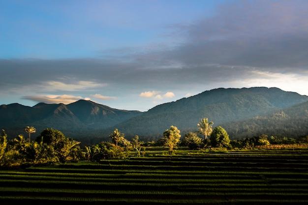 Piękna rano na polach ryżowych indonezyjski charakter