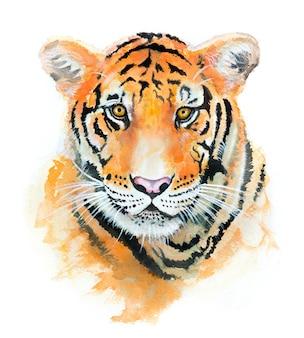 Piękna ręka maluje tygrys akwarela na papierze.
