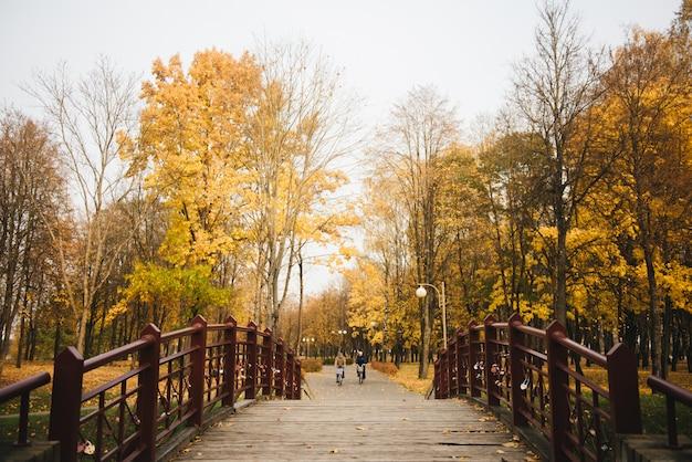 Piękna romantyczna aleja w parku z kolorowymi drzewami i światłem słonecznym.