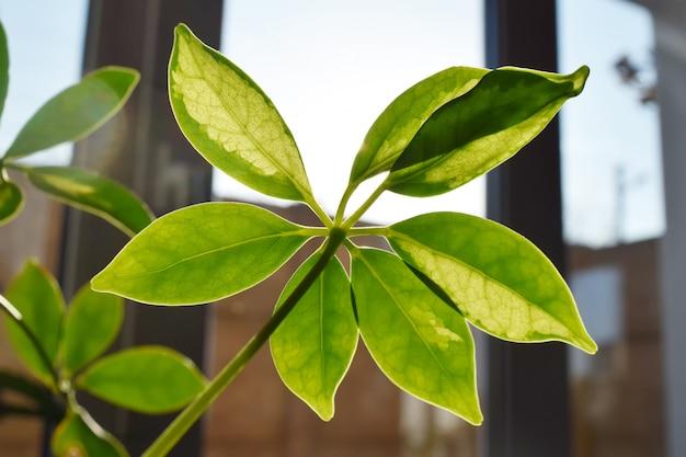 Piękna roślina domowa na parapecie