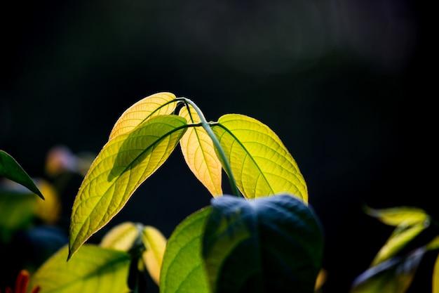Piękna roślina w delikatnym ciemności
