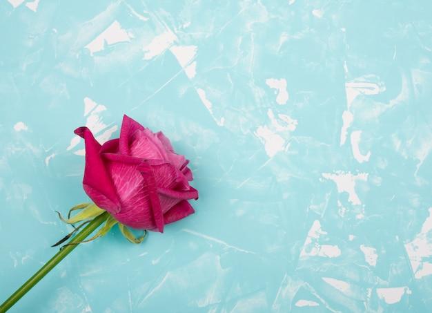 Piękna różowa i czerwona róża na niebieskim tle marmuru