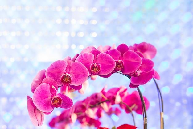 Piękna różowa orchidea