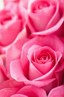 Piękna różowa róża kwitnie tło