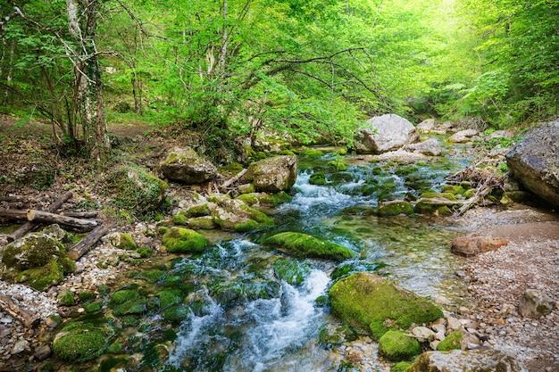 Piękna rzeczka w zielonym lesie