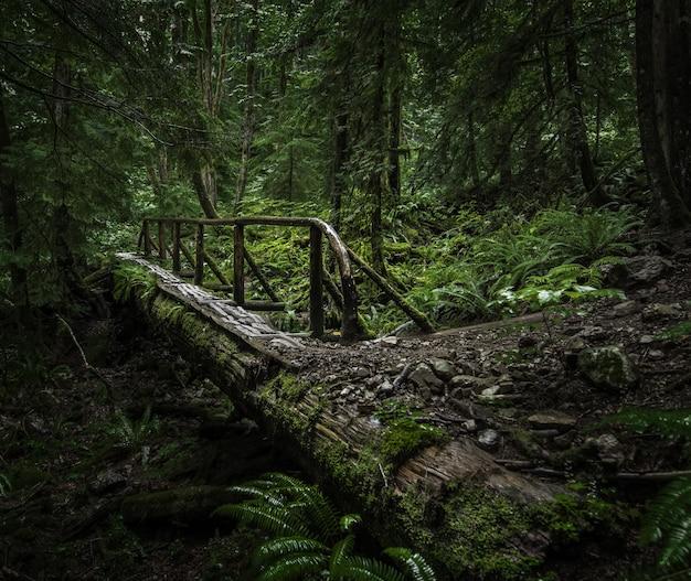 Piękna sceneria drewnianego mostu po środku lasu z zielonymi roślinami i drzewami