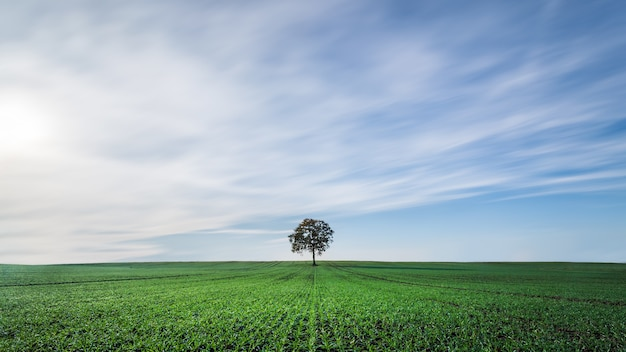 Piękna sceneria greenfield pod chmurnym niebem