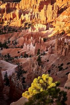 Piękna sceneria kanionu w parku narodowym bryce canyon, utah, usa