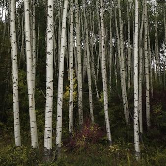 Piękna sceneria lasu pełnego wysokich drzew i innych gatunków roślin