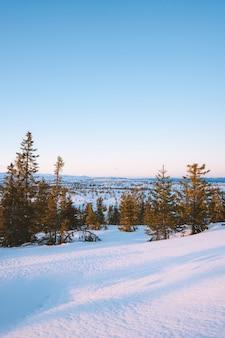 Piękna sceneria lasu z dużą ilością jodeł pokrytych śniegiem w norwegii