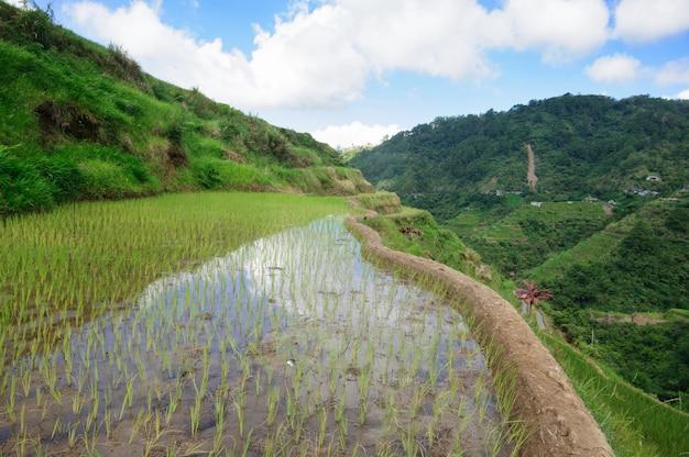 Piękna sceneria tarasów ryżowych banaue, prowincja ifugao, filipiny