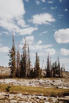 Piękna sceneria wsi natura z wzgórzami i drzewami pod chmurnym niebieskim niebem