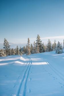 Piękna sceneria zaśnieżonego terenu z dużą ilością zielonych drzew w norwegii