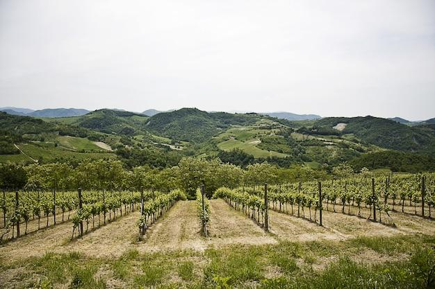 Piękna sceneria zielonej winnicy otoczonej wysokimi górami skalistymi