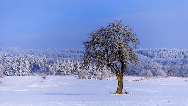 Piękna sceneria zimowego krajobrazu z drzewami pokrytymi śniegiem