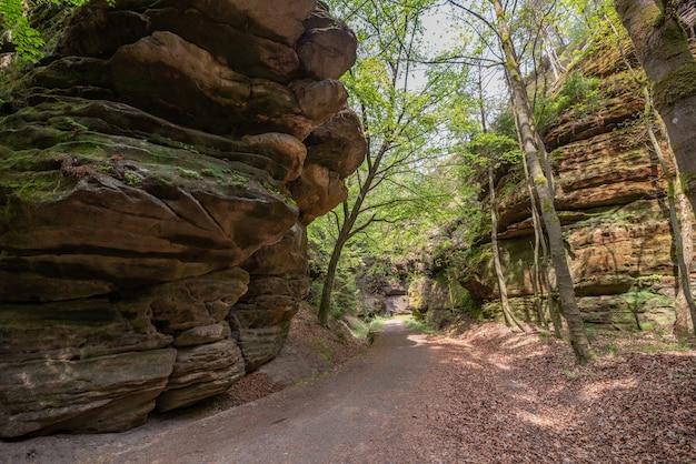 Piękna ścieżka otoczona skalistymi klifami porośniętymi zielenią w parku narodowym saskiej szwajcarii