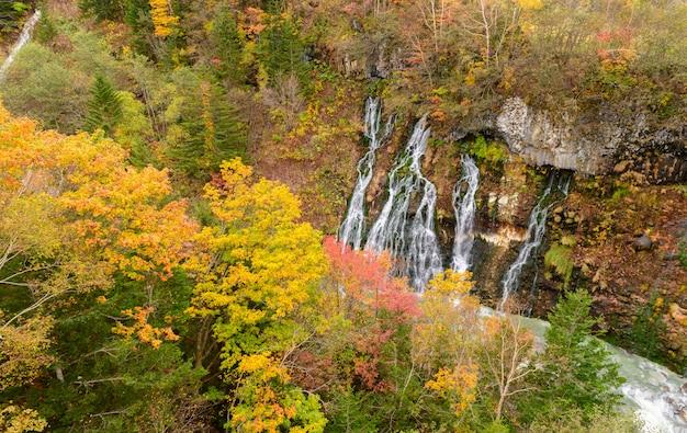 Piękna shirahige siklawa i kolorowy drzewo w jesieni
