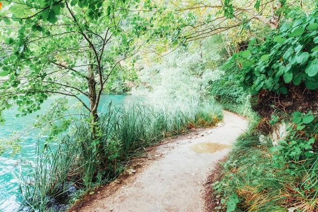 Piękna siklawa w lato zieleni lesie.