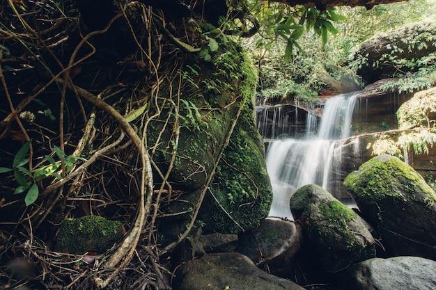 Piękna siklawa w lesie tropikalnym