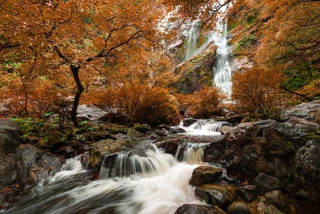 Piękna siklawa w parka narodowego lesie