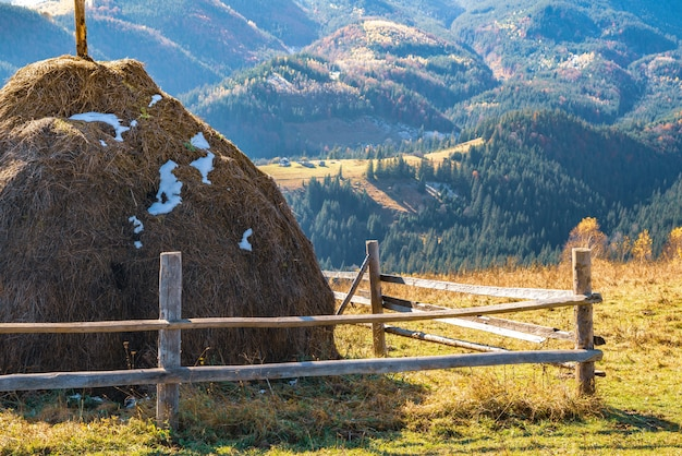 Piękna, świeża przyroda karpat jest przedstawiona na wysokich wzgórzach kolorowych lasów, zielonych łąk i niezwykłego błękitnego nieba