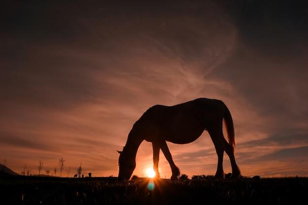 Piękna sylwetka konia i zachód słońca na łące, bilbao, hiszpania