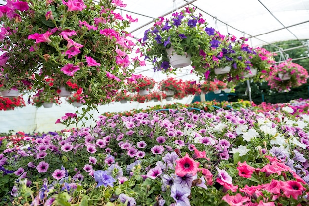 Piękna szklarnia z kolorowymi kwiatami