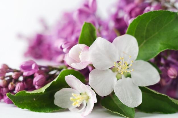 Piękna tapeta wiosna z kwitnących moreli i bzu.
