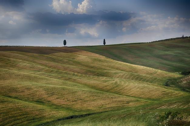 Piękna trawa pokryła pola pod chmurami na niebie