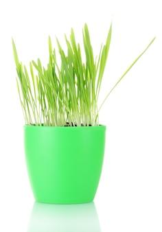 Piękna trawa w doniczce na białym tle