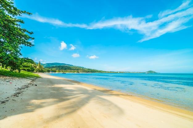 Piękna tropikalna plaża i morze z kokosowym drzewkiem palmowym