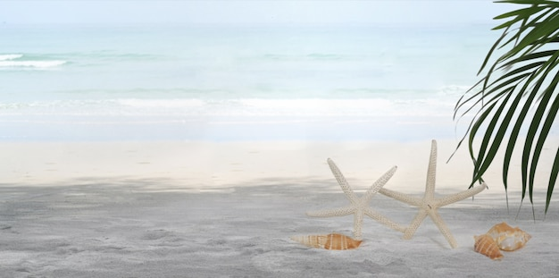 Piękna tropikalna plaża z białym piaskiem i czystą błękitną wodą z muszelkami i rozgwiazdą