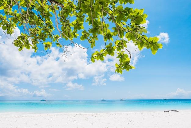 Piękna tropikalna plaża