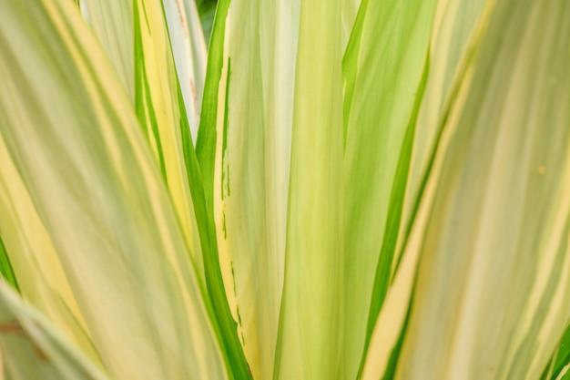 Piękna tropikalna zieleń opuszcza tło