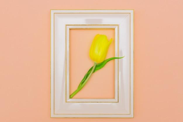 Piękna tulipanowa kwitnienie menchii ramka na zdjęcia, brzoskwini tło. koncepcja rama wiosna i wielkanoc. leżał płasko. pusta przestrzeń
