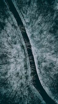 Piękna wąska droga między drzewami podczas zimy