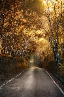 Piękna wiejska droga przechodząca przez pomarańczowe i czerwone liście w lesie jesienią o zachodzie słońca
