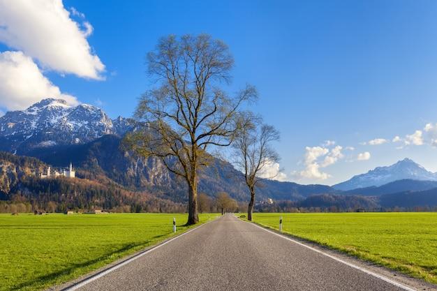 Piękna wiejska droga z drzewami, kolorowa trawa w górach