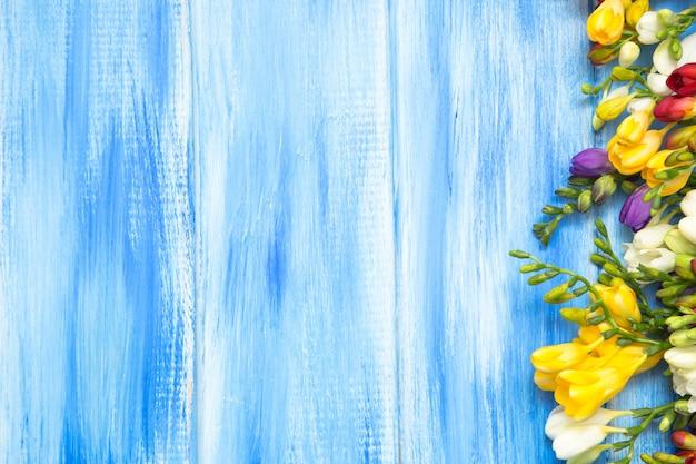 Piękna wiosny frezja kwitnie na błękitnym drewnianym tle