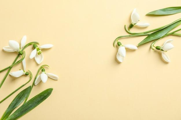 Piękna wiosny śnieżyczka kwitnie na koloru tle, przestrzeń dla teksta