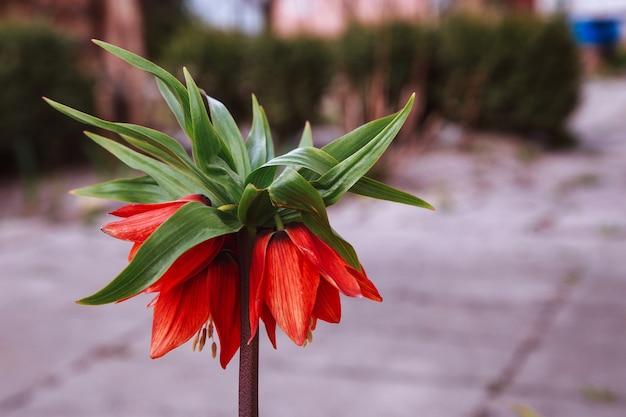 Piękna wróżka marzycielska magia czerwony żółty pomarańczowy kwiat lantana